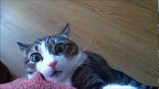 Приколы с котами. Крадущийся кот