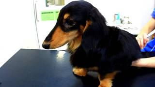 ヘルニア発症、手術は2009年3月※現在順調に回復していますが、リハビリ...