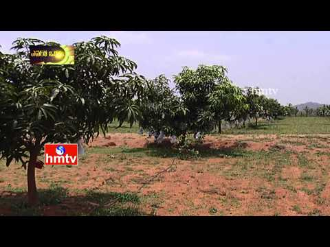 Arifa's AR4 Organic Mango Farm | HMTV Avani