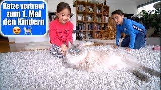 Katze vertraut 1. Mal den Kinder 😍 Ich bin so erleichtert! Eingewöhnung Haustier VLOG | Mamiseelen
