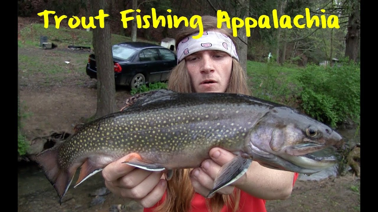 Trout Fishing Appalachia