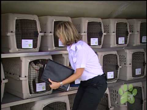 What is pet airways youtube for Air travel with dog in cabin