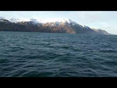 Whale watching in Hursavik