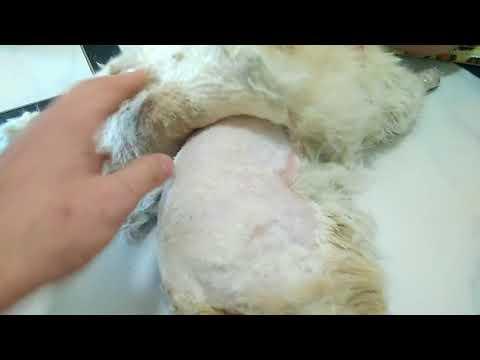 Колтуны (скатанная шерсть) у кота
