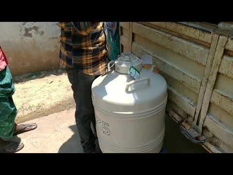 Liquid Nitrogen Refill Into LN2 Semen Container