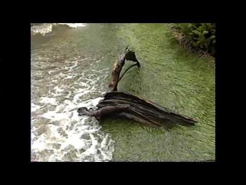 Flood Update - Don Chenevert  5-23-11