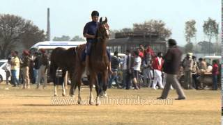 Participants warm up for horse riding competition during Kila Raipur in Punjab