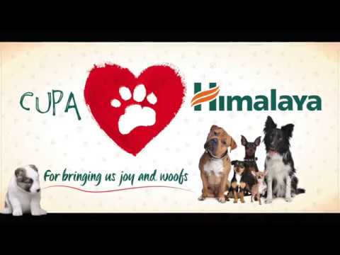 Himalaya Gifts CUPA Second Chance Adoption Center a Vibrant Makeover