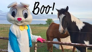 Desensitizing Our Homestead Animals with a Scary Bunny Suit