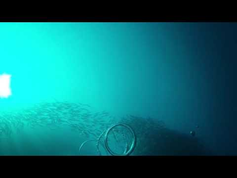 Underwater bubble rings