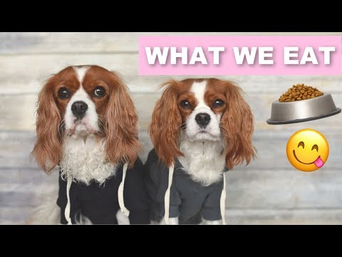 WHAT WE EAT IN A DAY | Dog Nutrition & Diet