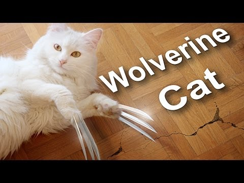 WOLVERINE CAT vs ZOBI LA MOUCHE - PAROLE DE CHAT