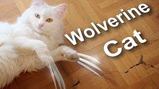 Repeat youtube video WOLVERINE CAT vs ZOBI LA MOUCHE - PAROLE DE CHAT