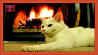 ❀ Sound Therapy ~ Cat Purring by the Fire ~