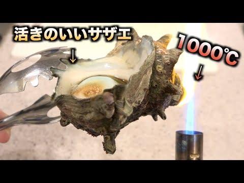 元気なサザエの先っぽだけ1000℃に熱したらまさかの・・・