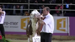 SIA 2013 : Concours des vaches Montbéliard