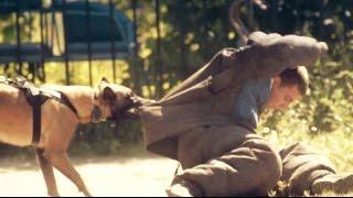 бельгийские овчарки -  Малинуа / Belgian Shepherd - Malinois(Подготовка 2 прекрасных Малинуа к защите хозяина (ЗКС). Собаки, которые работают с полной отдачей, очень..., 2015-08-15T21:04:02.000Z)