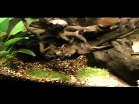 450 liter gezelschapsaquarium 100 gallon aquarium youtube. Black Bedroom Furniture Sets. Home Design Ideas