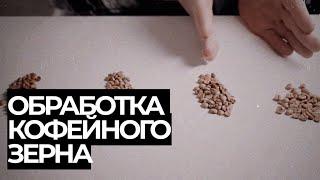 Обработка кофе и ее виды. Как она влияет на вкус.