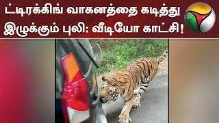ட்டிரக்கிங் வாகனத்தை கடித்து இழுக்கும் புலி - வீடியோ காட்சி! | Viral Video | Tiger