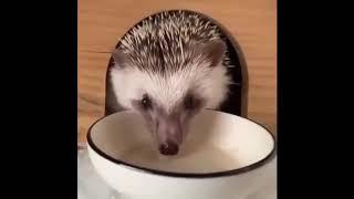 cute animal Милые животные видео подборка милые моменты животных