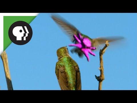 Hummingbird's Face Resembles Baby Octopus