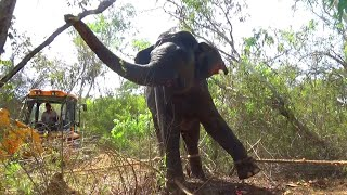Elephants get a free pass to a National Park from a village area