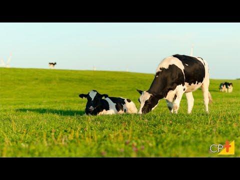 Curso Manejo da Vaca Gestante no Parto e Pós-Parto CPT