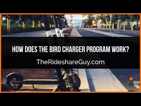 How Does the Bird Charger Program Work?
