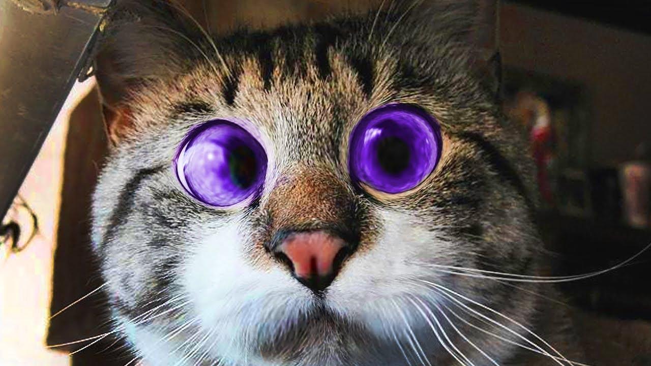 Забавные животные, кошки, собаки и другие приколы с животными (сбои животных) 2019