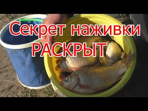 Рыбалка. Супер наживка для ловли карася.My Fishing