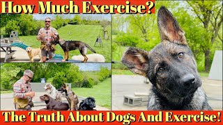How To Exercise Your Puppy   The Truth About Dogs and Exercise