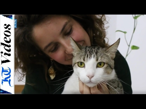 Dubai office adopts a cat to keep its staff happy