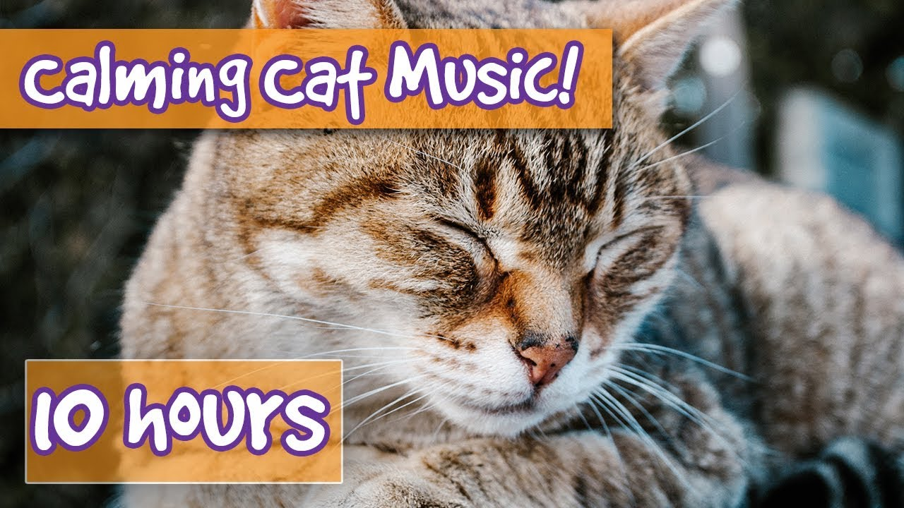 Watch How to Calm a Cat video