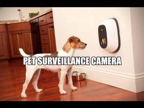 Pet Surveillance Camera Petchatz