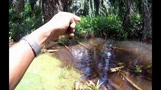 Mancing Ikan Puyu Di Lubuk Tersembu...