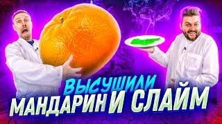Download Что если ВЫСУШИТЬ мандарин, слайм, кукурузу, яйцо? / Научные нубы 2.0 Mp3 and Videos