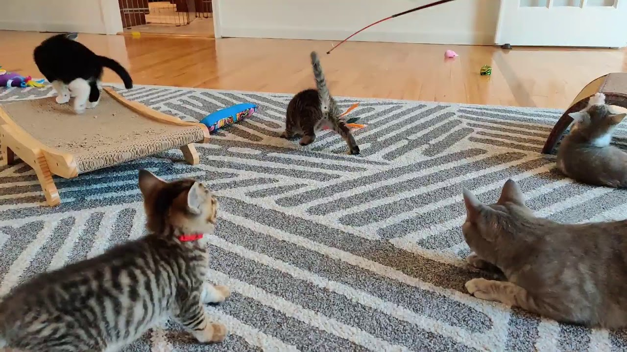 Doctor Says to do This Every Day to Stop Sagging Kittens 2021-07-21