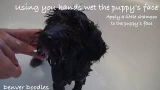 How to wash your puppy