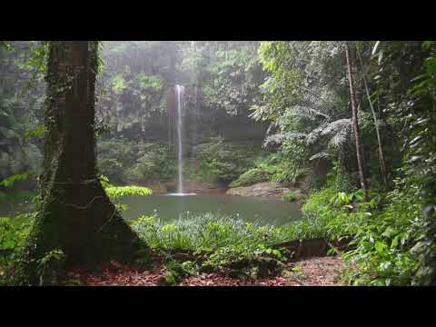 Nature Sounds | Waterfall in the Jungle 1 hour -  Relaxing Music