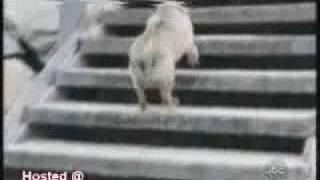 פספוסי כלבים קורעים מצחוק