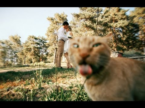 Purrfect Shots: Hylarious Cat Photobombs --- CAT COMPILATION