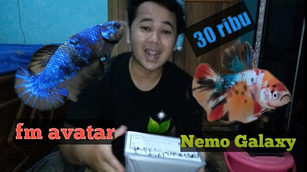 UNBOXING ikan cupang Nemo galaxy seharga 30k.. Real bukan ...