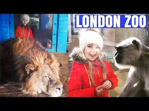 Day in London Zoo