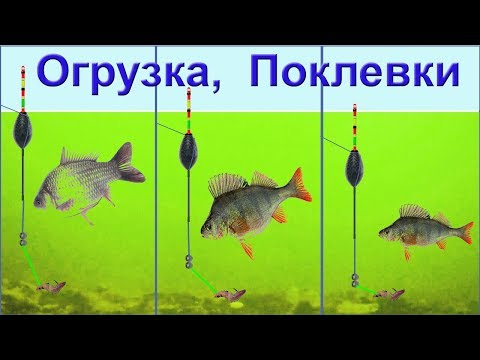 ПОКЛЕВКИ на поплавок. Ловля в проводку, огрузка снасти, подпасок, выставление глубины. рыбалка fish