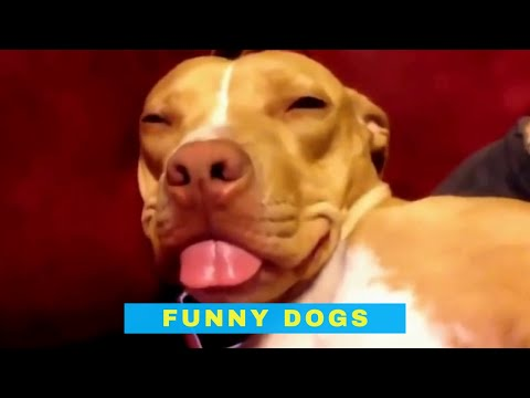 Cute and Funny Dog Videos