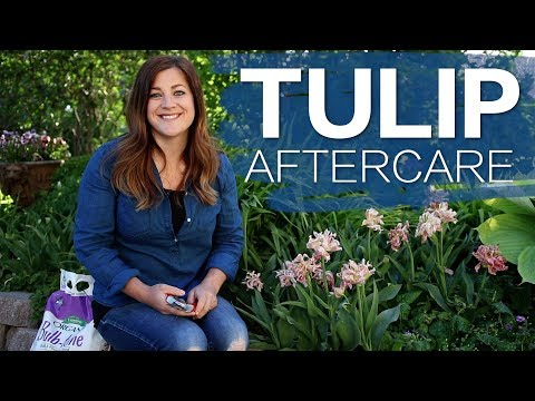 Tulip Aftercare 🌷 // Garden Answer