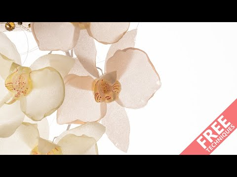 Learn how to make a wafer paper orchid...