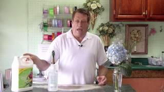 This Tip: Make Your Hydrangeas Last Longer