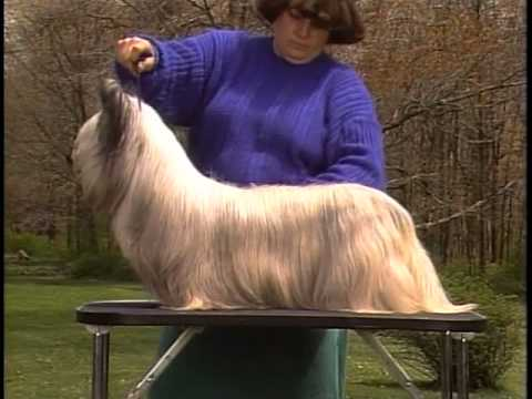 Skye Terrier - AKC Dog Breed Series